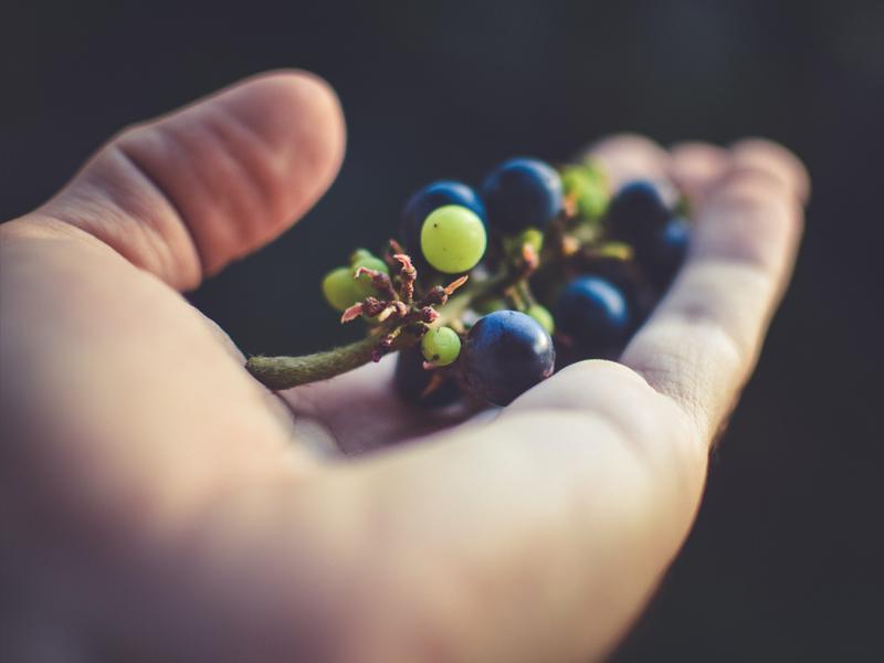 Innovazioni per una vitivinicoltura sostenibile   25 Maggio 2018